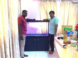 Amazing Aquariums And Centre Tables   Fish for sale in Greater Accra, Tema Metropolitan