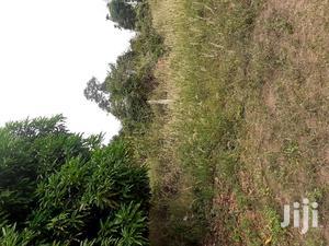 Two(2) Acres of Farm Land at Juaben for Sale. 8000 Per Acre | Land & Plots For Sale for sale in Ashanti, Ejisu-Juaben Municipal