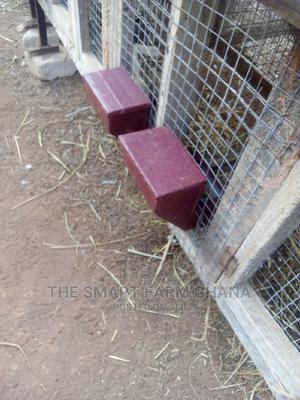 Rabbit Feeders   Farm Machinery & Equipment for sale in Ashanti, Kumasi Metropolitan