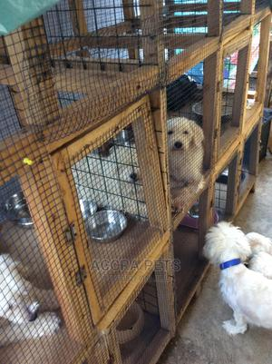 1-3 Month Female Purebred Poodle | Dogs & Puppies for sale in Greater Accra, Adjiriganor