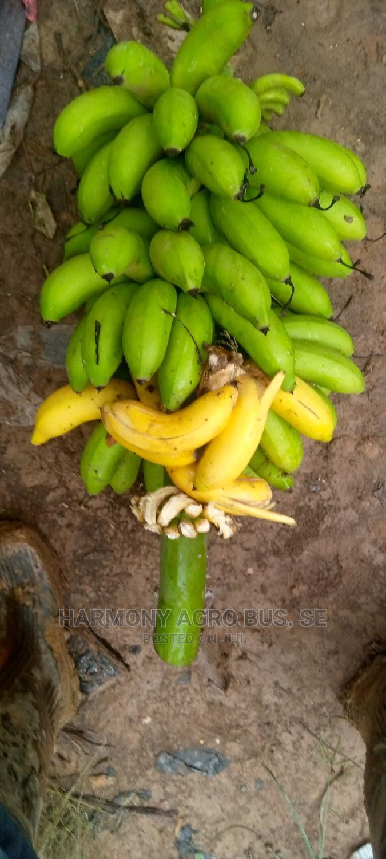 Banana Seedlings | Feeds, Supplements & Seeds for sale in Ahafo Ano South, Ashanti, Ghana