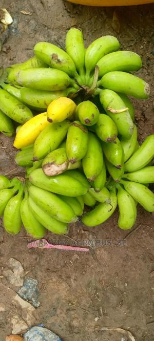 Banana Seedlings | Feeds, Supplements & Seeds for sale in Ashanti, Ahafo Ano South