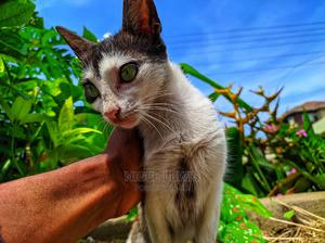 1+ Year Female Mixed Breed Mongrel (No Breed)   Cats & Kittens for sale in Greater Accra, Osu
