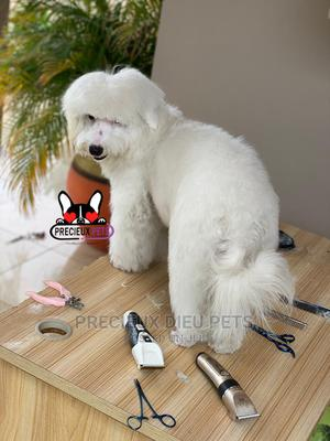Miniatures Poodle Grooming Service | Pet Services for sale in Greater Accra, Nungua