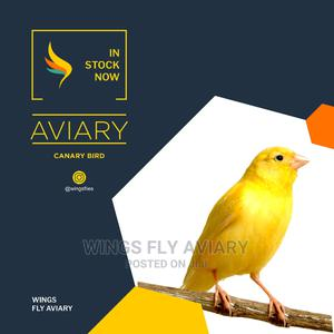 Asian Canary   Birds for sale in Greater Accra, Achimota