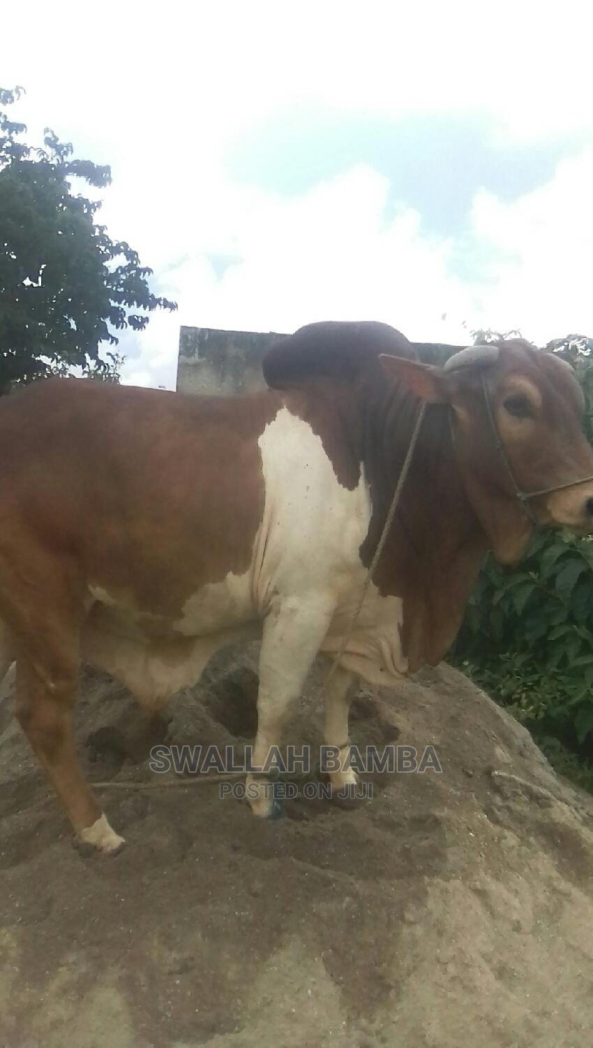 Archive: Cow for Sale