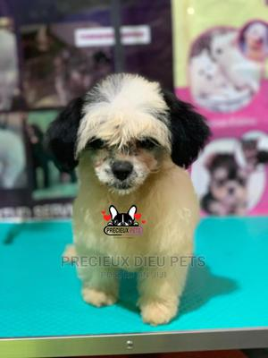 Puppy Grooming Services | Pet Services for sale in Greater Accra, Nungua