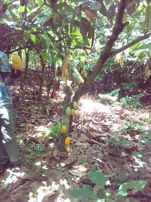 ADEISO-NTEKYEREKYE-170 Acres of Rich and Fertile Farm Land | Land & Plots For Sale for sale in Eastern Region, Akuapim South