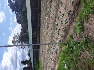 Paultry House for Rent   Livestock & Poultry for sale in Eastern Region, Suhum/Kraboa/Coaltar