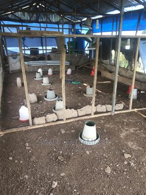 Poultry Farm | Land & Plots for Rent for sale in Northern Region, Tamale Municipal