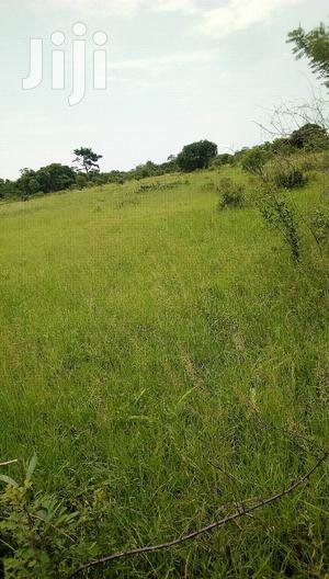 5000 Acres Farm Land for Sale or Lease | Land & Plots For Sale for sale in Volta Region, Ho Municipal