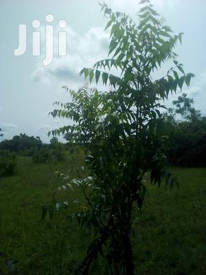 150 Acres of Land Farm Land | Land & Plots For Sale for sale in Volta Region, Ho Municipal