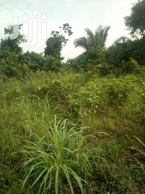 10.000 Acres of Farm Land for Sale | Land & Plots For Sale for sale in Volta Region, Ho Municipal