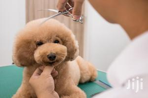 General Dog Grooming (Care) | Pet Services for sale in Greater Accra, Achimota