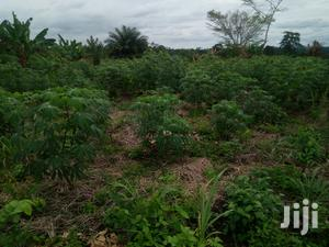 We Have Ten Acres Farm Land for Sale at Mangoase | Land & Plots For Sale for sale in Greater Accra, Accra Metropolitan