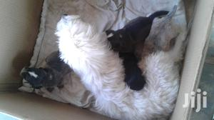 Grooming Services and Care | Pet Services for sale in Greater Accra, Adenta